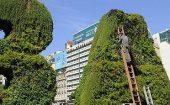 La importancia de construir Jardines Verticales y Terrazas Verdes en la Ciudad