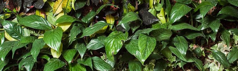 Cuadros verdes newgreen