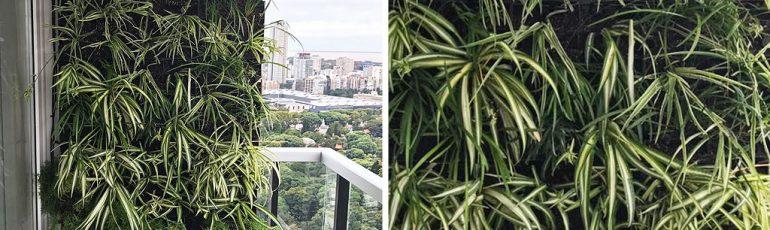 Vista Buenos Aires Jardín vertical